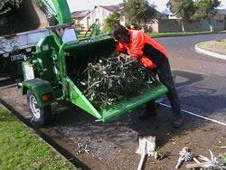 tree removal holdfast bay