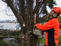 tree removal mt barker